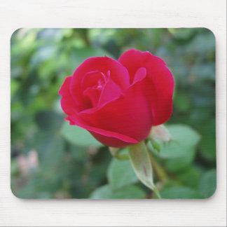 El color de rosa perfecto alfombrillas de ratón