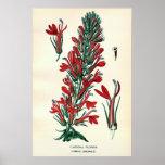 El color del siglo XIX antiguo florece litho Poster