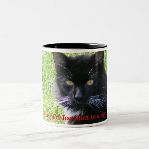 El comienzo del ronroneo-fect a una taza del gato