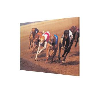El competir con de galgos en pista impresión en lienzo