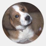 El compinche del perro del rescate le implora etiqueta redonda