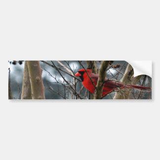 El concentrar masculino del cardenal pegatina para auto