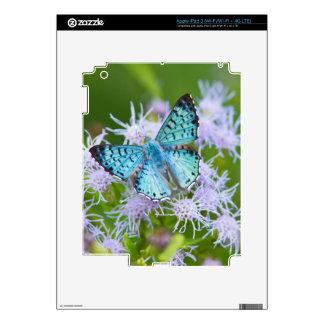 El condado de Cameron, Tejas. Metalmark azul iPad 3 Skins