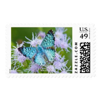 El condado de Cameron, Tejas. Metalmark azul Sello Postal