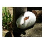 El conejito soña las postales