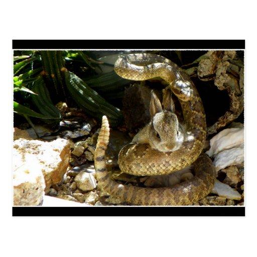 El conejito y la serpiente de cascabel de Mojave Postales