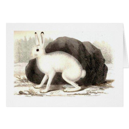 El conejo blanco felicitacion