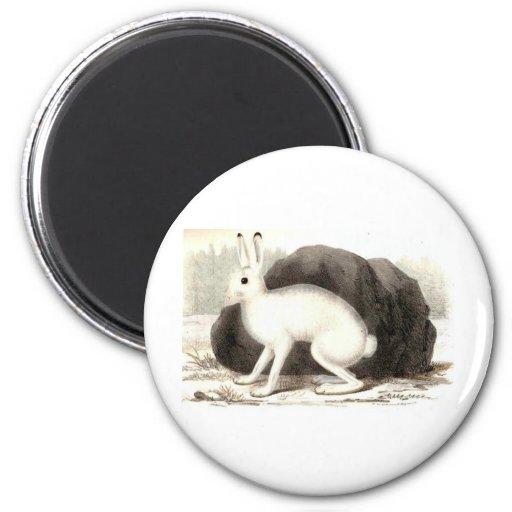 El conejo blanco imán redondo 5 cm