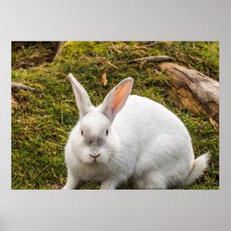 El conejo blanco posters