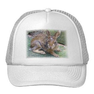 El conejo representa la gorra de béisbol