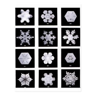 El copo de nieve platea fotografía del tiempo postales