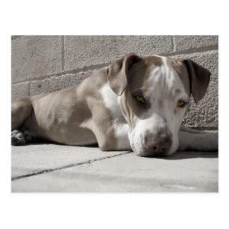 el corazón de un perro de Bullie Tarjeta Postal