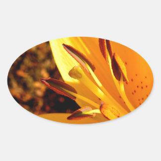 El corazón del lirio amarillo pegatina ovalada