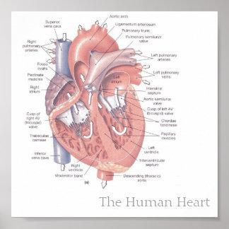 El corazón humano póster