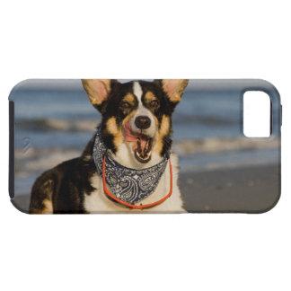 El Corgi lindo que lame el suyo taja iPhone 5 Case-Mate Cárcasas