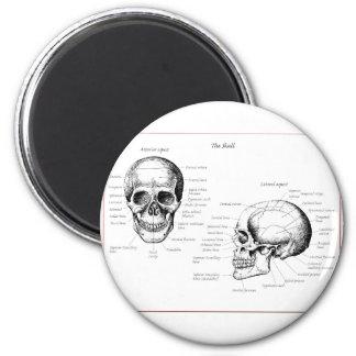 El cráneo detalla el frente y el lado imán redondo 5 cm