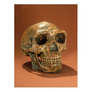 El cráneo reconstruido del hombre de Pekín Tarjetas Postales