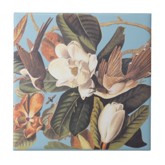 El cuco cargado en cuenta negro de Audubon Azulejo Cuadrado Pequeño