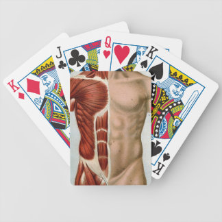 El cuerpo humano baraja cartas de poker