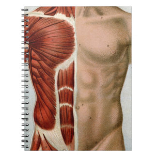 El cuerpo humano libreta