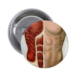 El cuerpo humano pins