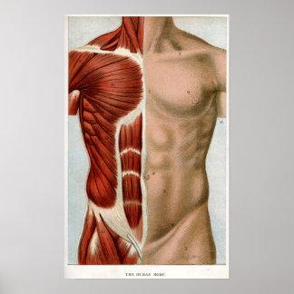 El cuerpo humano posters
