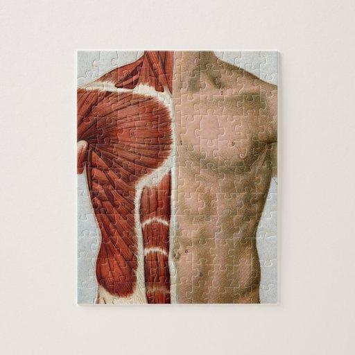 El cuerpo humano rompecabezas con fotos