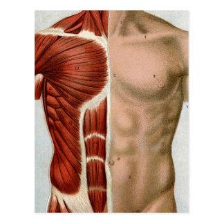El cuerpo humano tarjetas postales