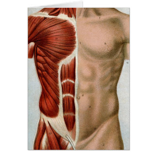 El cuerpo humano tarjetón