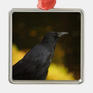 el cuervo adorno navideño cuadrado de metal