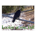 El cuervo de Hungy Postales