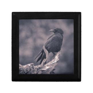 El cuervo de observación caja de recuerdo