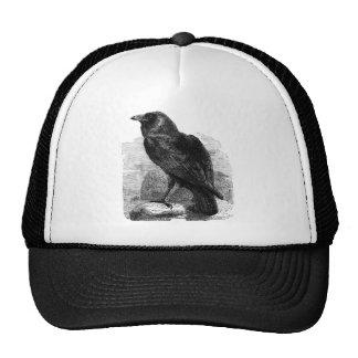 El cuervo gorro