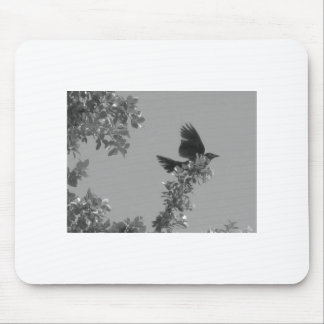 El cuervo tapetes de ratón
