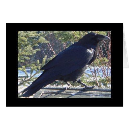 el cuervo tarjeta