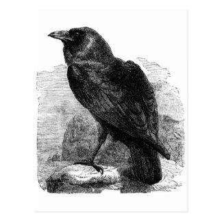 El cuervo postal