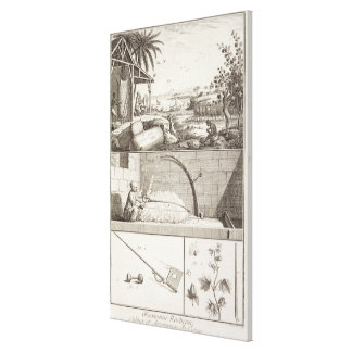 El cultivo del algodón, del 'Encyclopedia Impresión De Lienzo