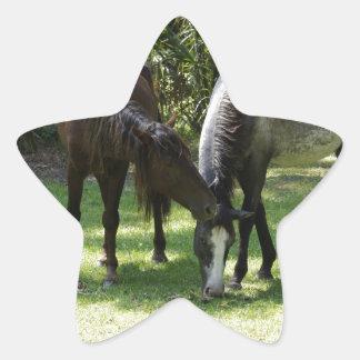 El Cumberland salvaje Calcomanía Forma De Estrella Personalizadas