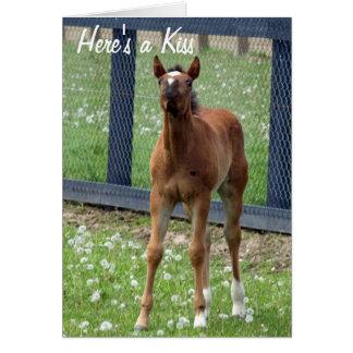 El cumpleaños del caballo besa la tarjeta