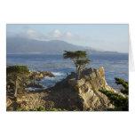 El Cypress solitario Felicitación