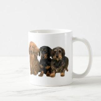 El Dachshund adora la taza