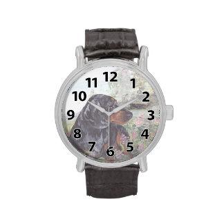 El Dachshund dapple el reloj del soñador del