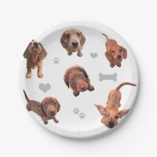 El dachshund rojo del chocolate de Eridox dapple Plato De Papel De 7 Pulgadas