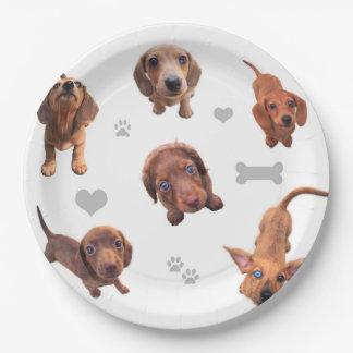 El dachshund rojo del chocolate de Eridox dapple Plato De Papel De 9 Pulgadas