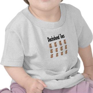 El Dachshund toca con la punta del pie la camisa