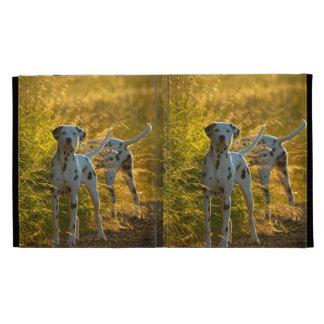 El Dalmatian persigue la caja del folio del iPad