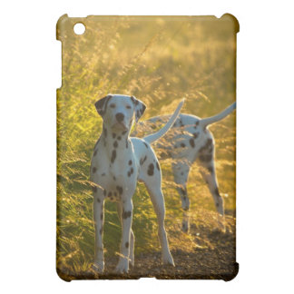 El Dalmatian persigue la caja del iPad