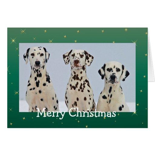 El Dalmatian persigue la tarjeta de Navidad hermos