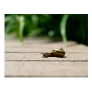 ¡Él de Sr. Snail Did!! Postal
