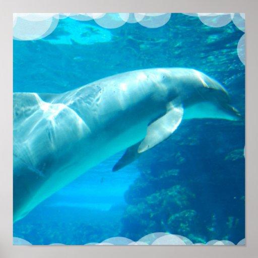 El delfín burbujea poster